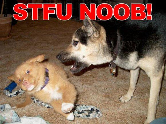 [Image: stfu_noob.jpg]